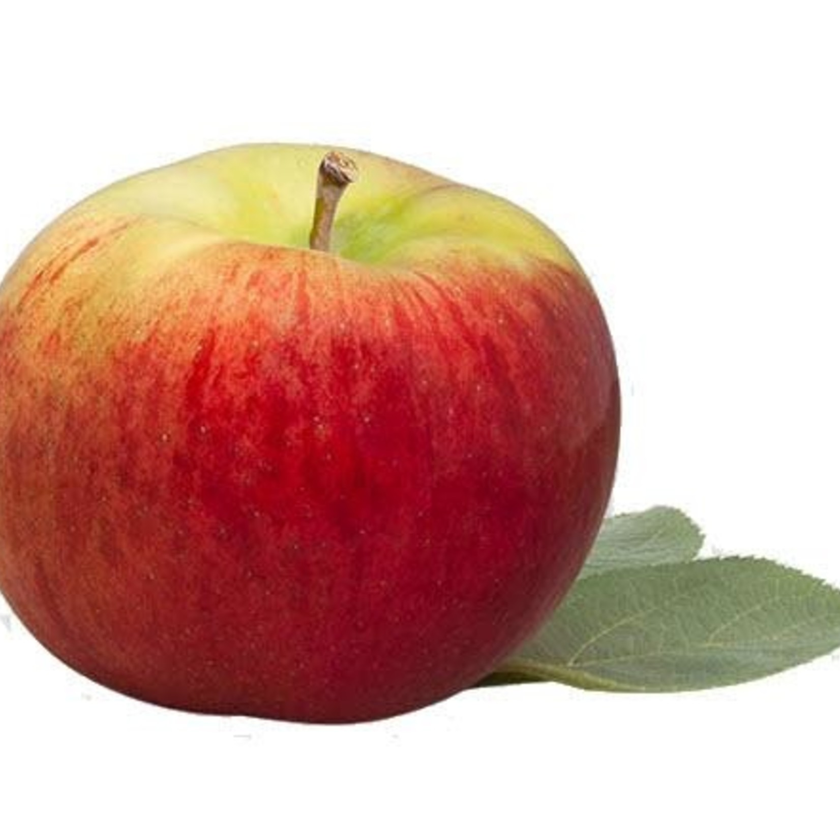 Pomme Cortland - (Panier)
