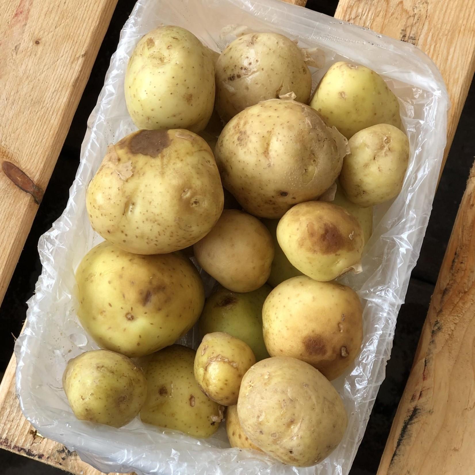 Pomme de Terre Grelot-Blanches