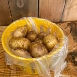 Patates Ile d'Orleans