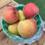 Pommes Gibouleau (Panier)
