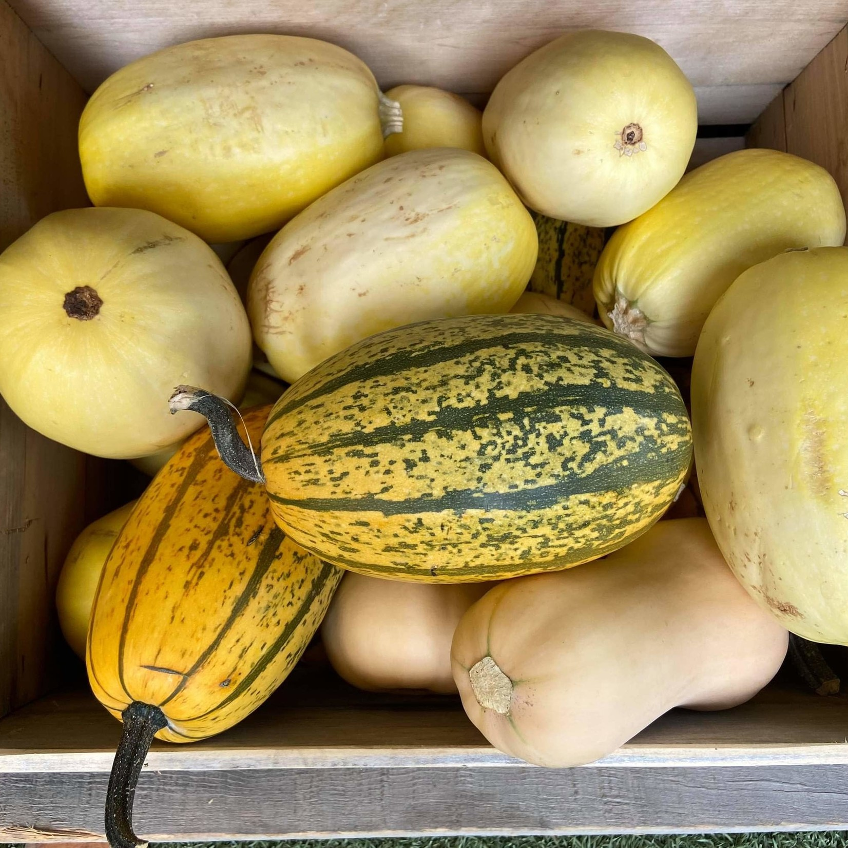 Petites courges MIXED (2)