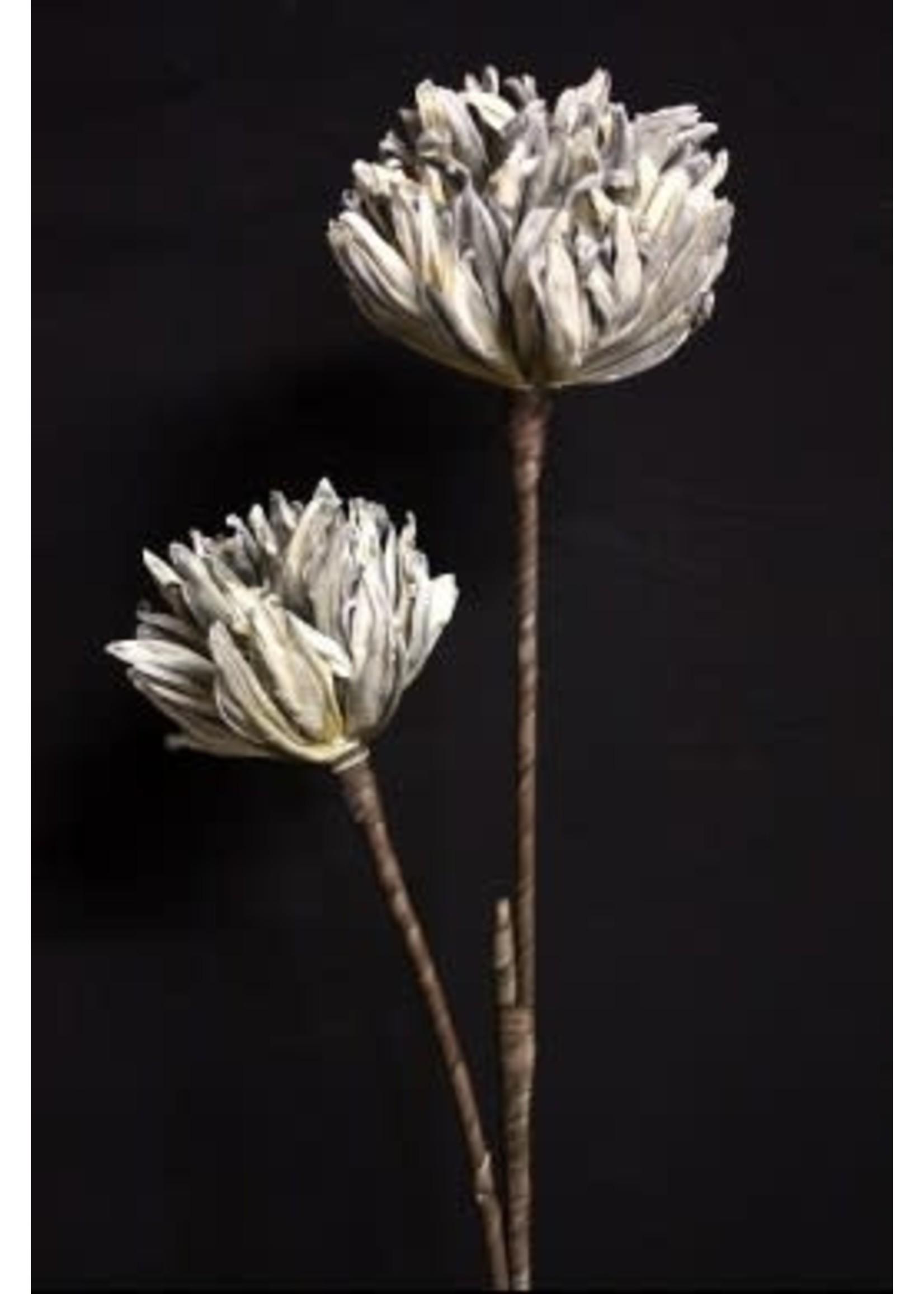 GREY FOAM FLOWER