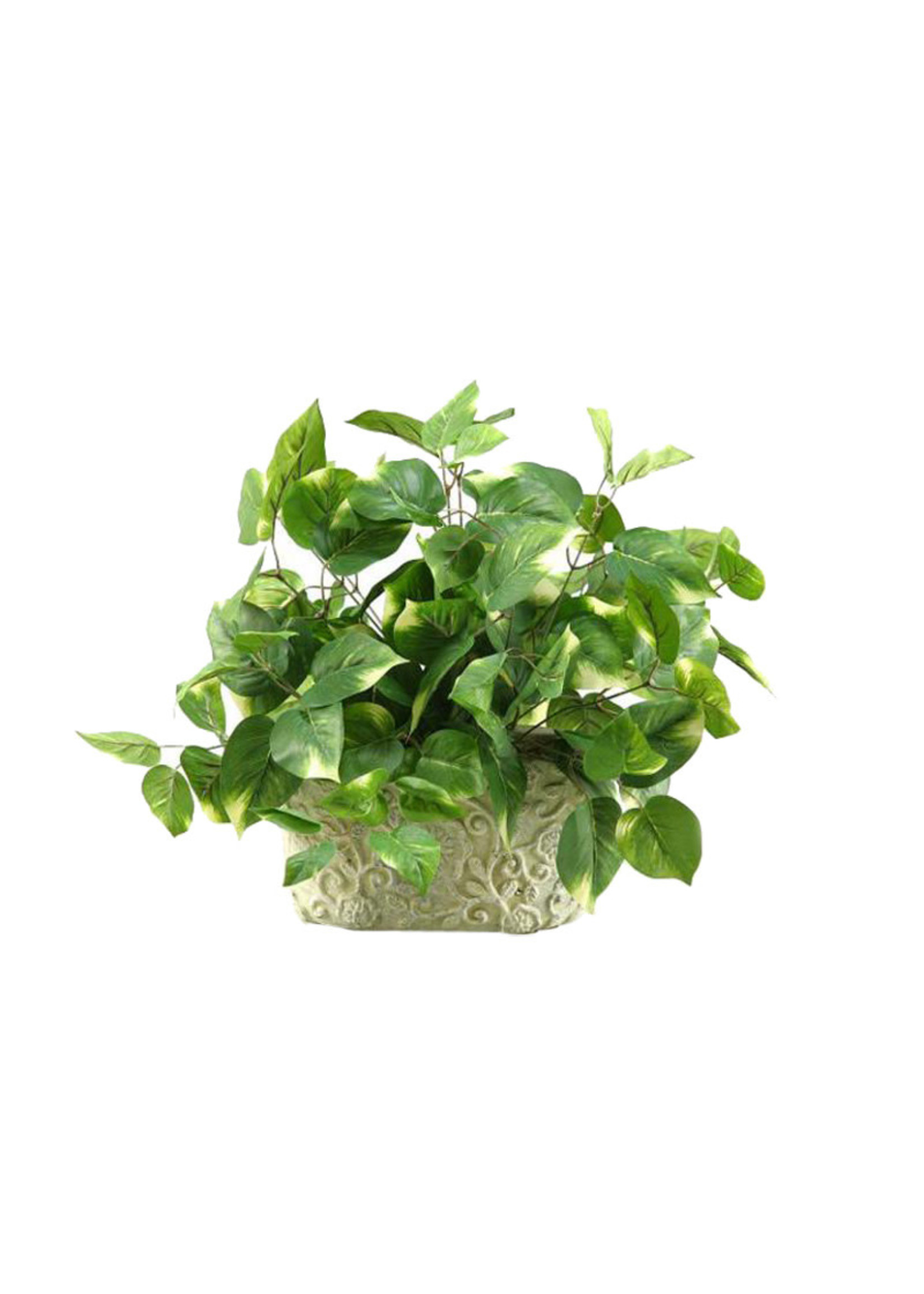 ENGLISH IVY IN OBLONG CERAMIC PLANTER