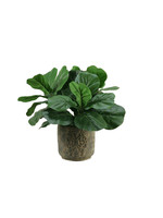 FIDDLE LEAF FIG IN ROUND STONE CONTAINER