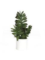 JADE PLANT IN WHITE CERAMIC CYLINDER