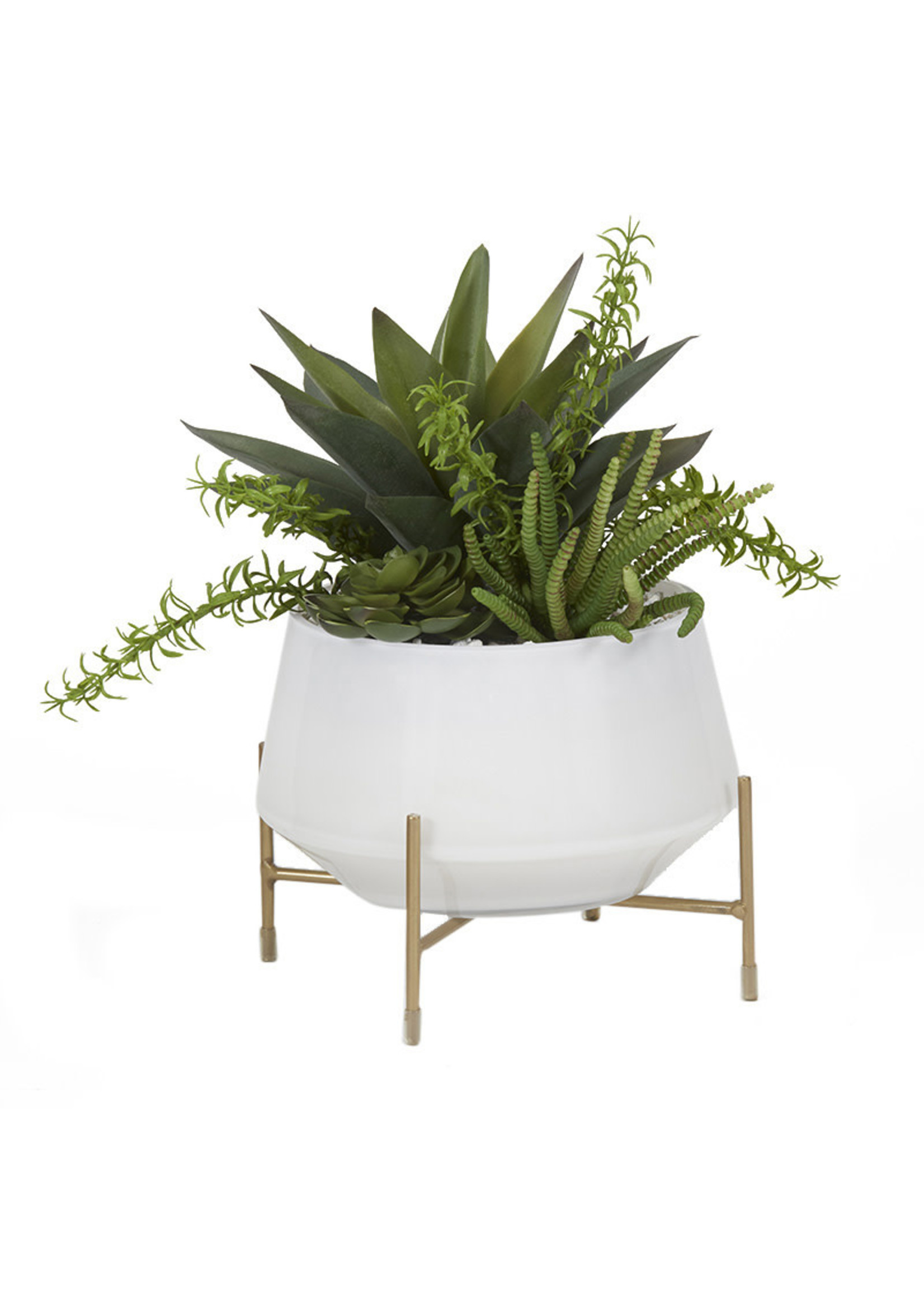 ALOE AND SUCCULENTS IN WHITE GLASS BOWL W/ STAND