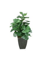 FIDDLE LEAF FIG PLANT IN SQUARE CONTAINER