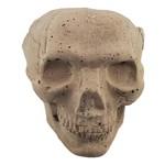East Coast Sirens Concrete Skull