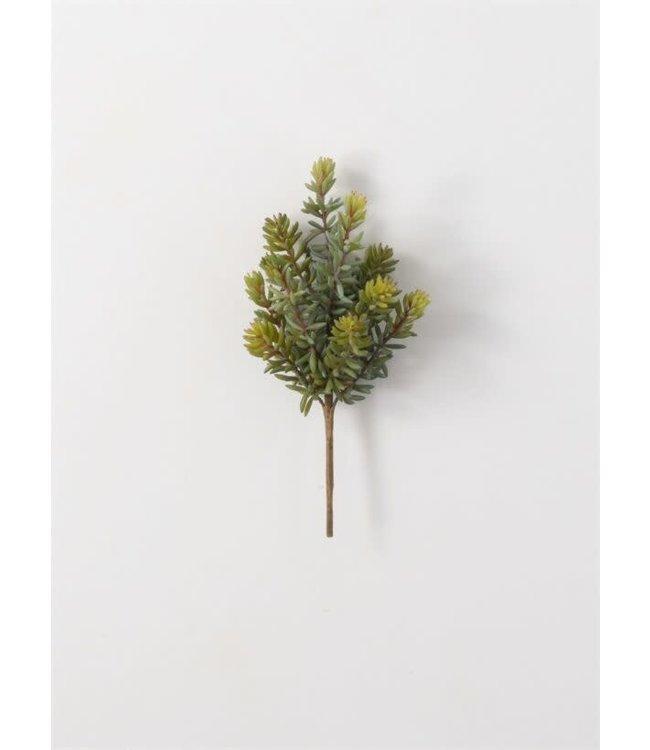 Sullivans Gift Succulent Pick