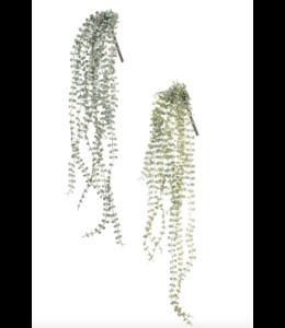 Sullivans Gift Mini Leaf Bush