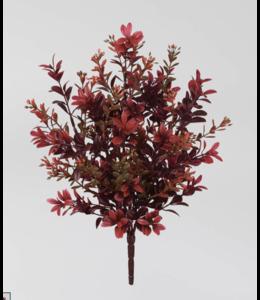 Sullivans Gift Red Boxwood Plant