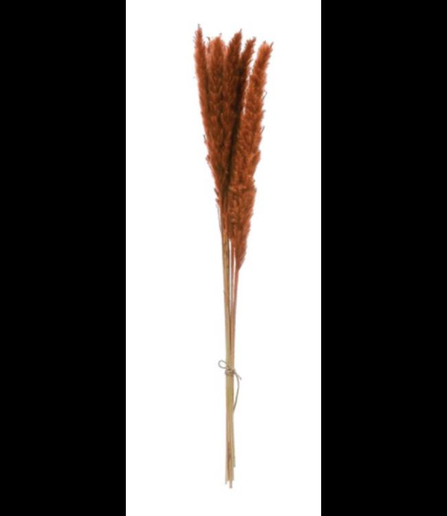 Creative Co-Op Dried Natural Pampas Grass Bunch, Saffron Color