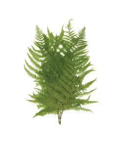 "Creative Co-Op 16""H Dried Natural Fern Leaf in Bag, Green"