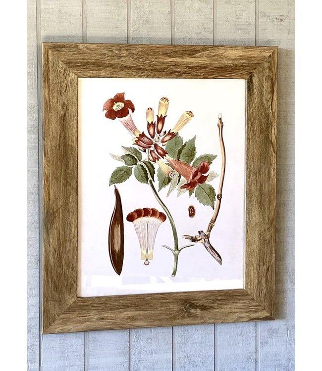 Porch View Home Trumpet Vine Botanical Framed Prints