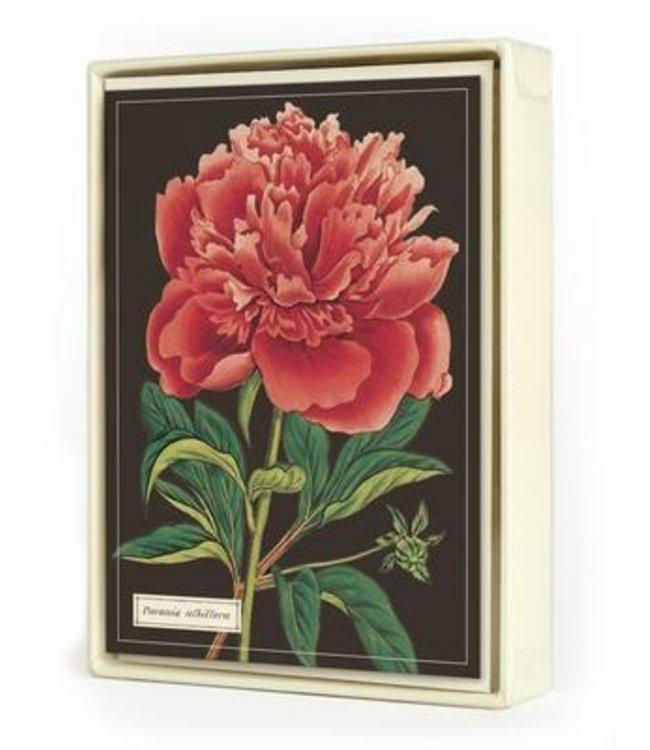 Cavallini & Co. Botanical Boxed Note Cards