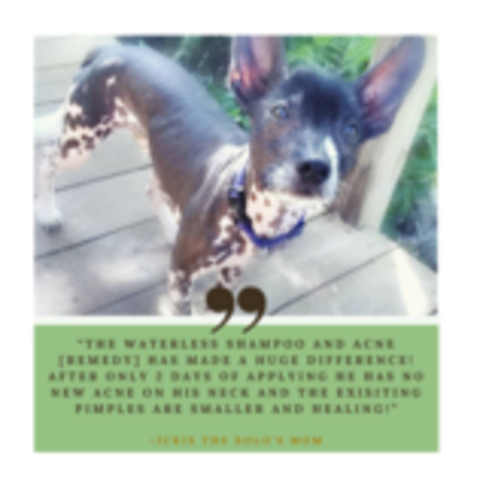 Renewed Pet For ALL PETS ACNE/BLACKHEAD REMEDY