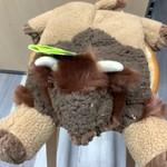 Huggle Tuffut Flatties - Buffalo - Large