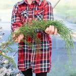 Winter Greens, Carolina Sapphire